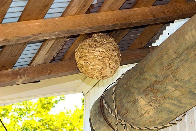 スズメバチの巣 国分寺市が無料で駆除