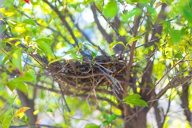 部屋のご案内中に ハトの巣を発見 対処方法