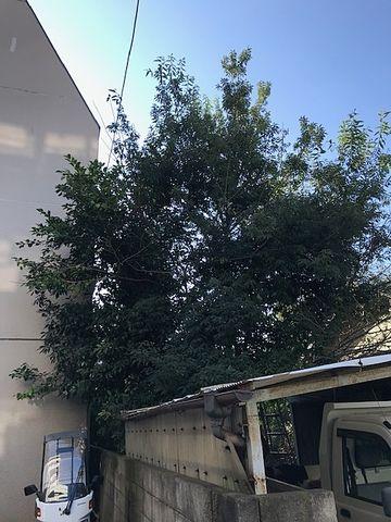 隣地の樹木の伐採