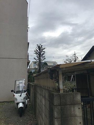 隣地の樹木の伐採終了