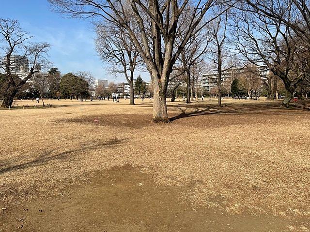 武蔵国分寺公園 円形広場