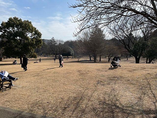 武蔵国分寺公園 こもれび広場